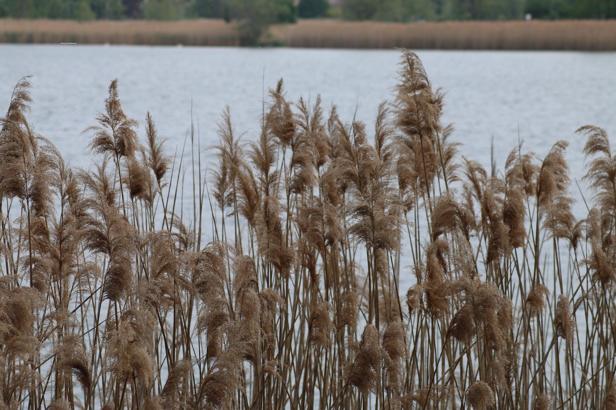 Lago del Segrino passeggiata