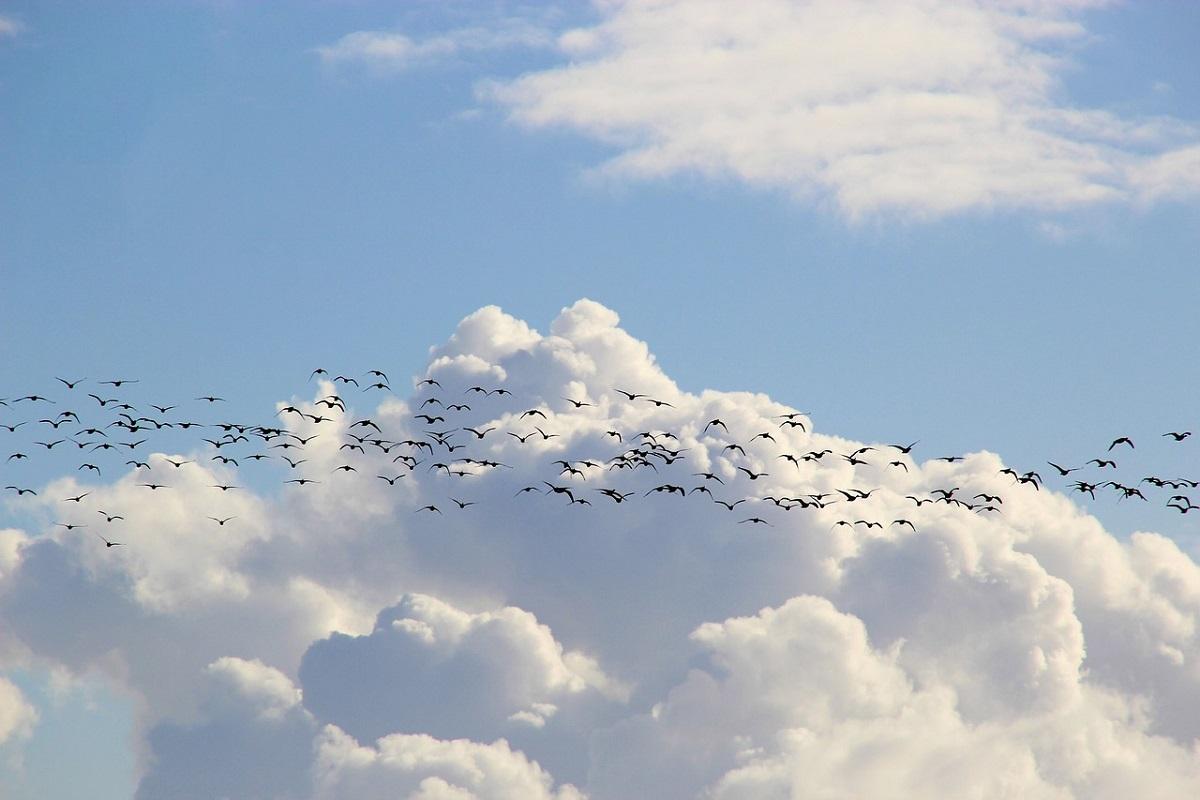 Migrazione autunnale degli uccelli