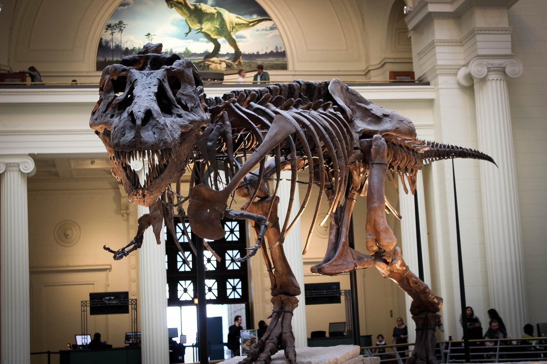 new york t-rex all'asta