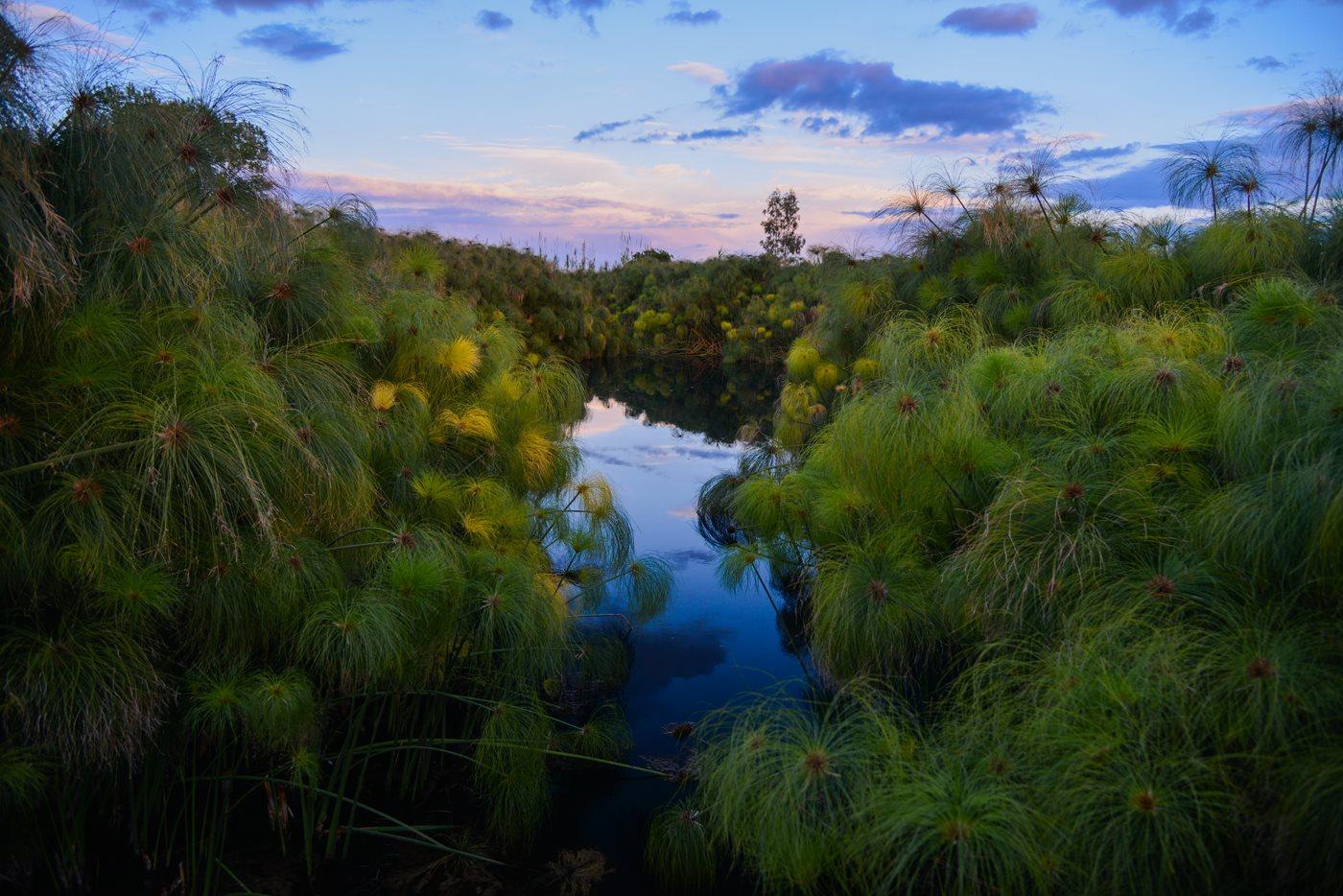 riserva del fiume ciane