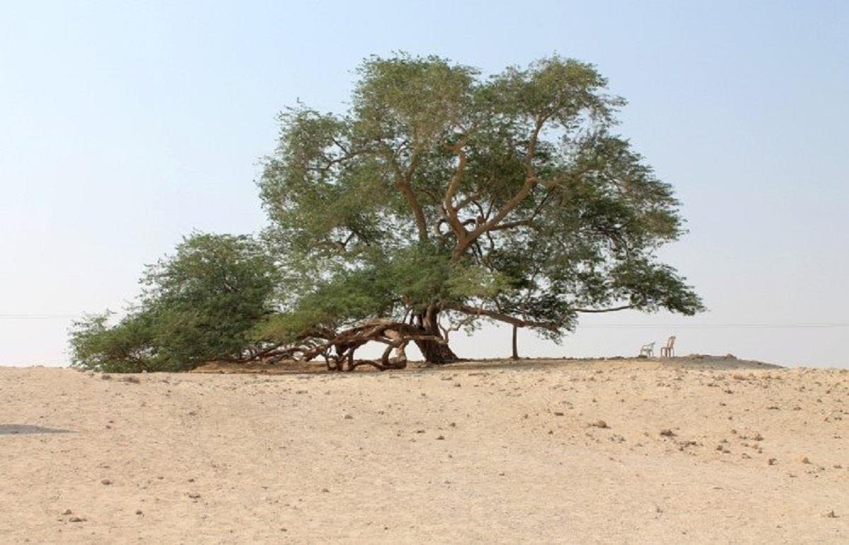 albero bahrain