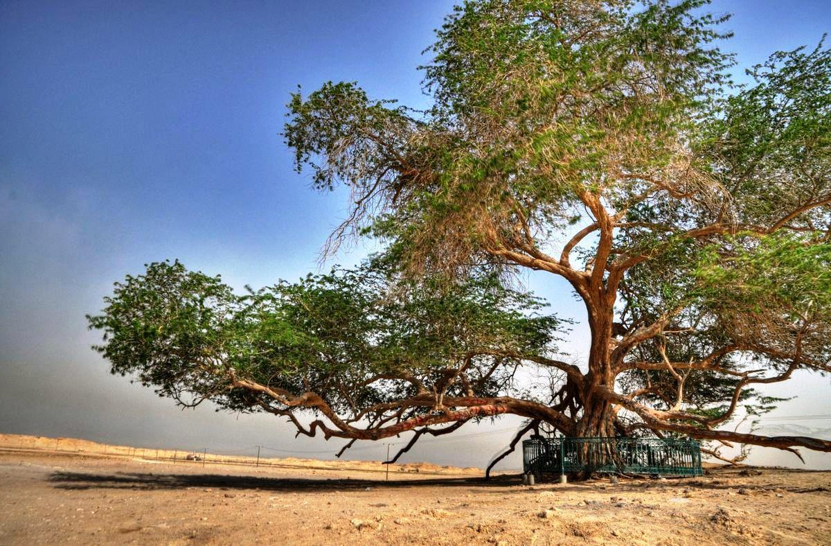 albero della vita bahrain