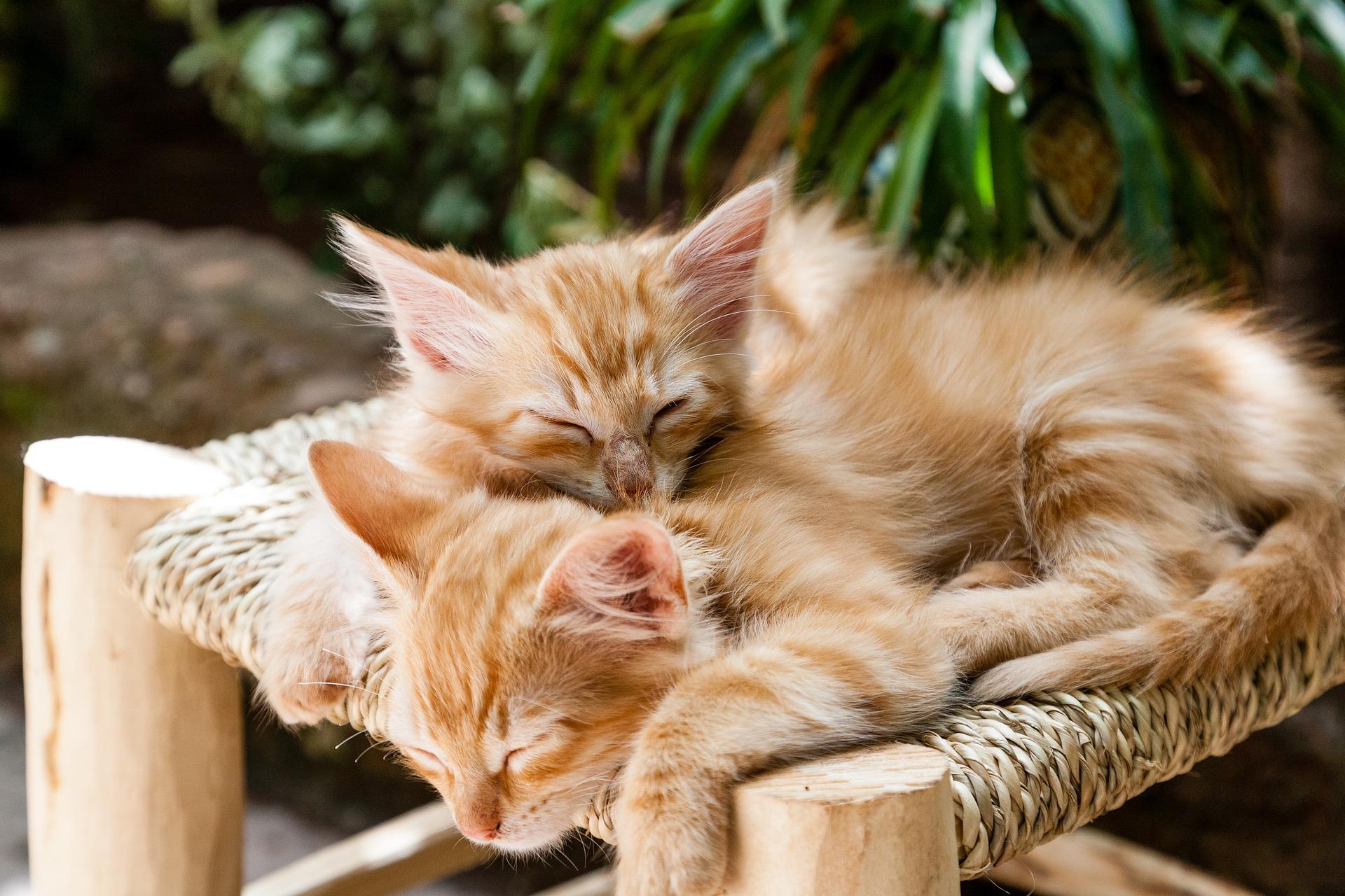 borghi per chi ama i gatti