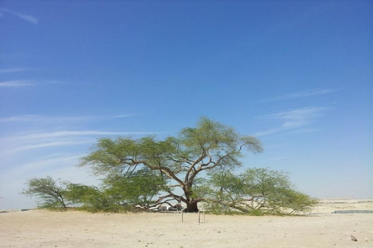 deserto del bahrain