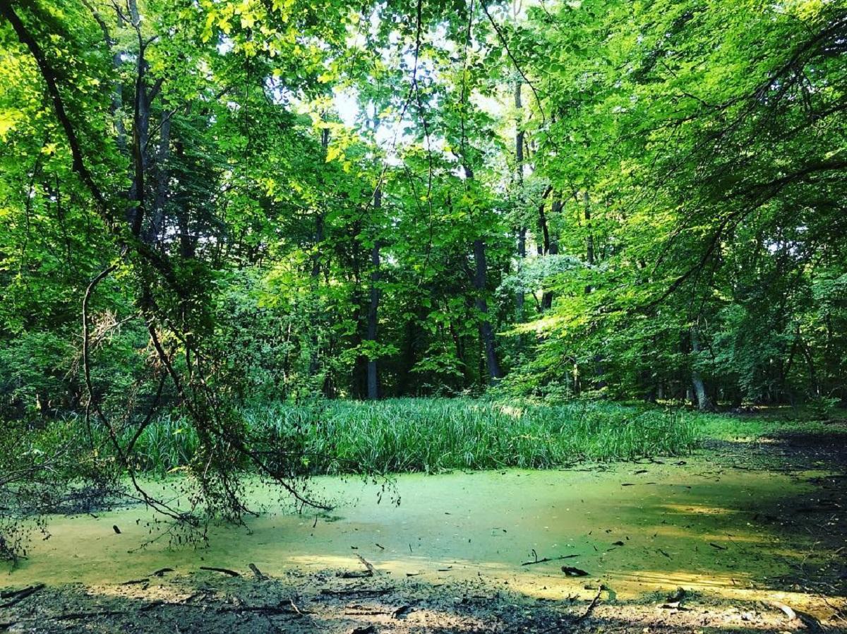 foresta hoia baciu romania