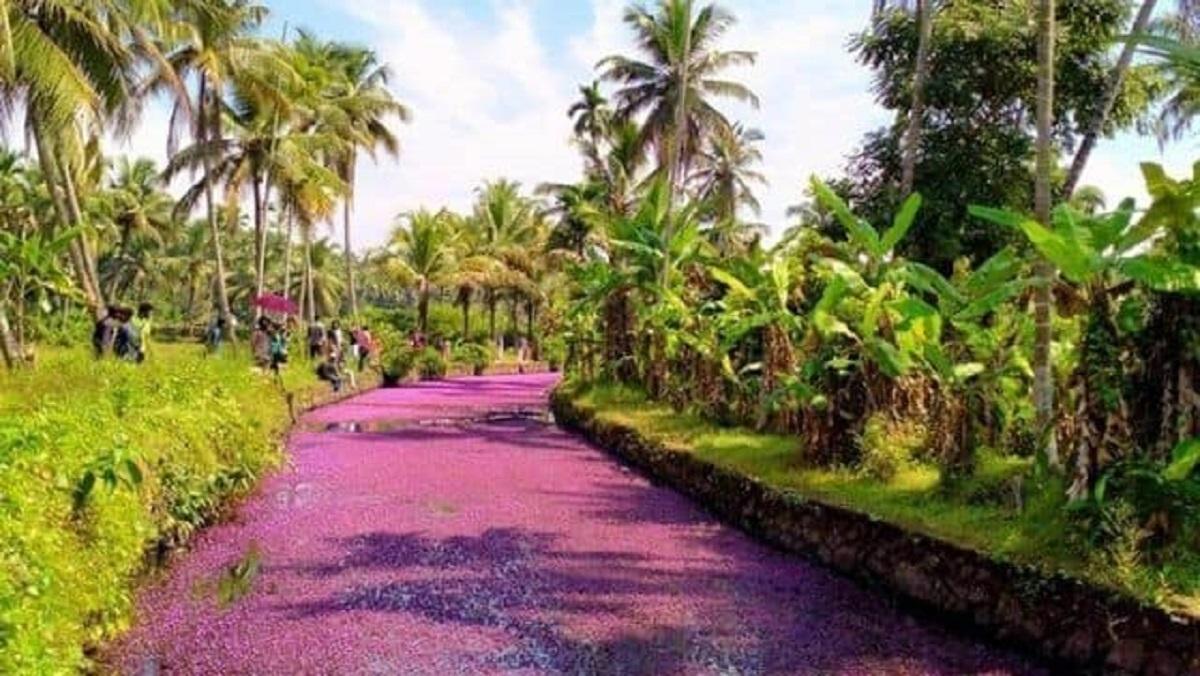 India fiume rosa fiori
