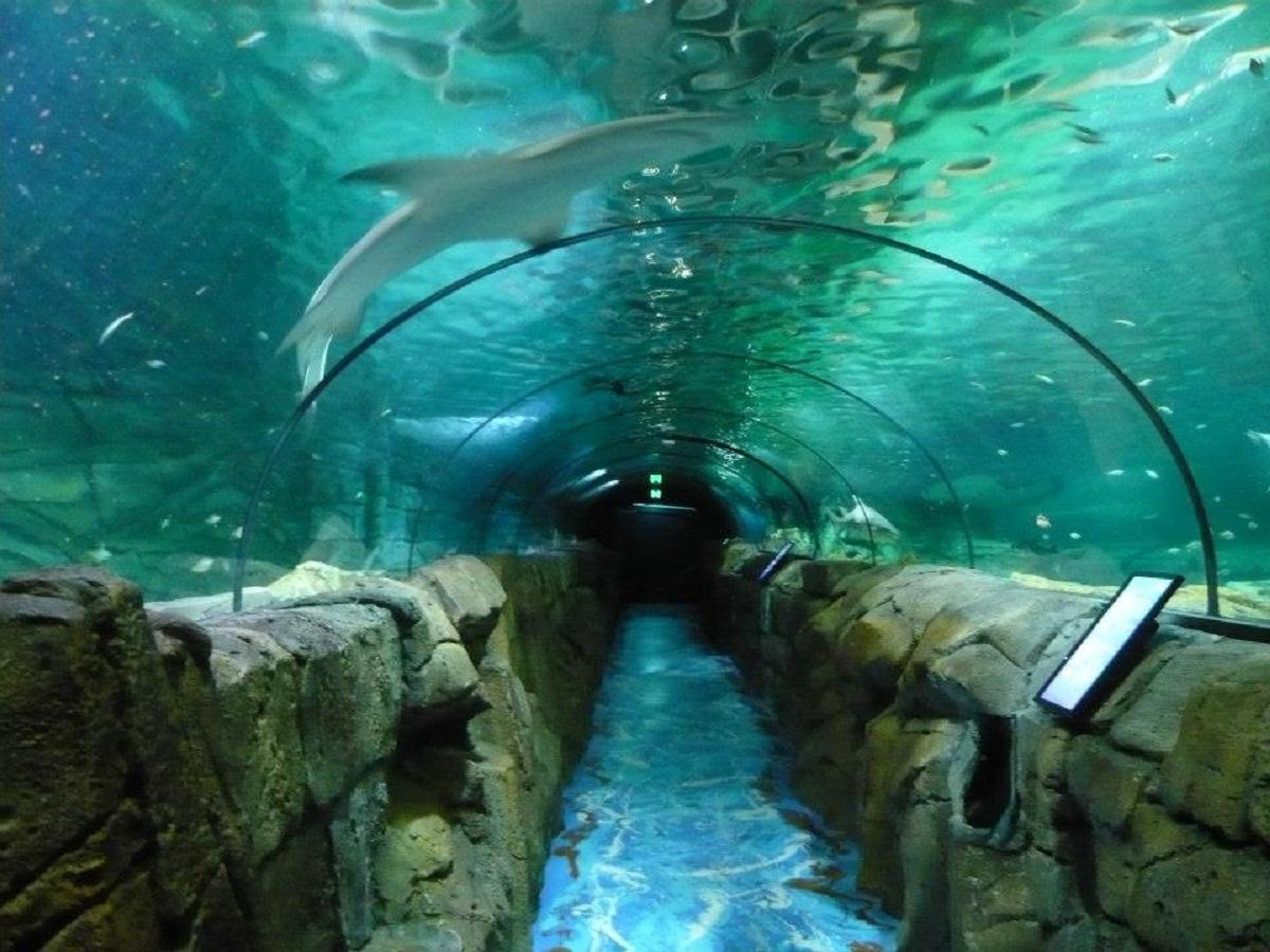 acquario di sydney