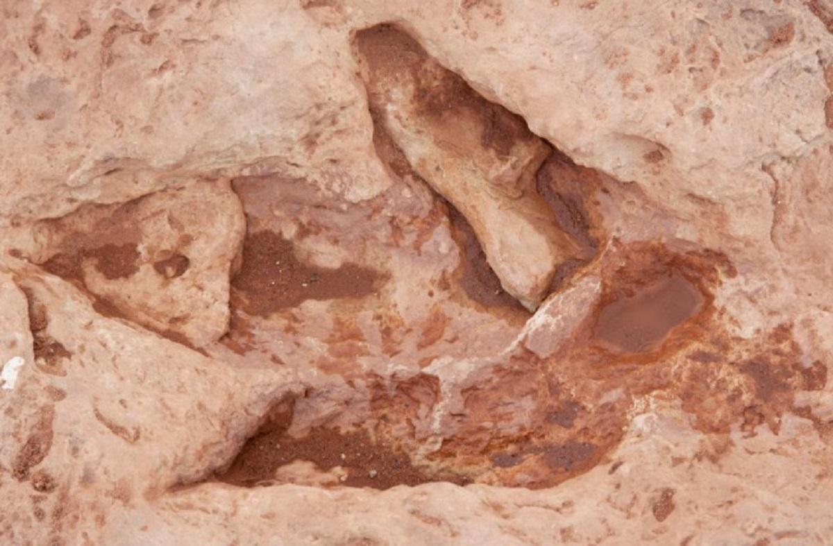 alpi piemontesi fossili