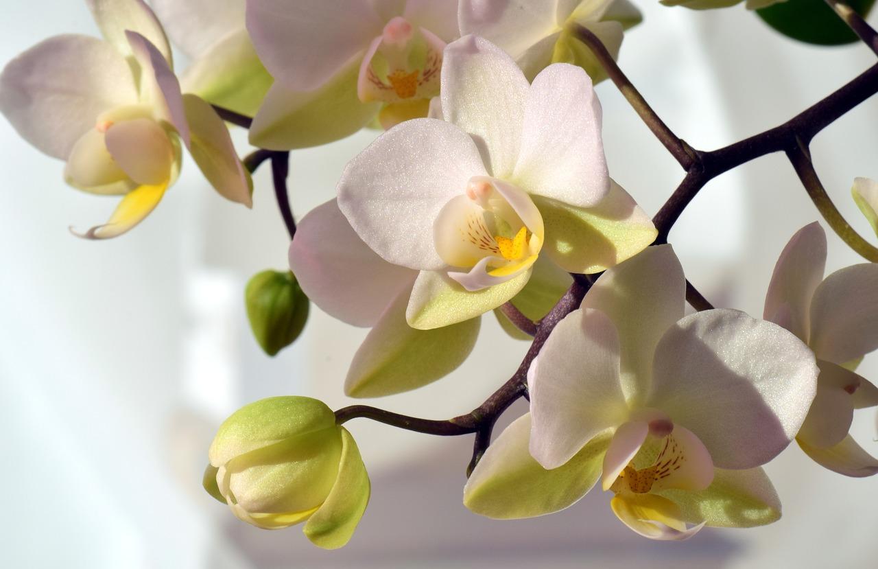 Cipro marzo giallo