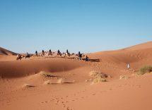 egitto escursioni cammelli