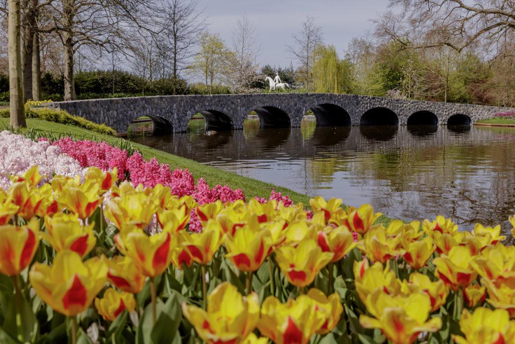 Olanda tulipani