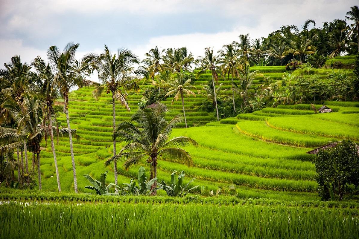 Risaie Indonesia