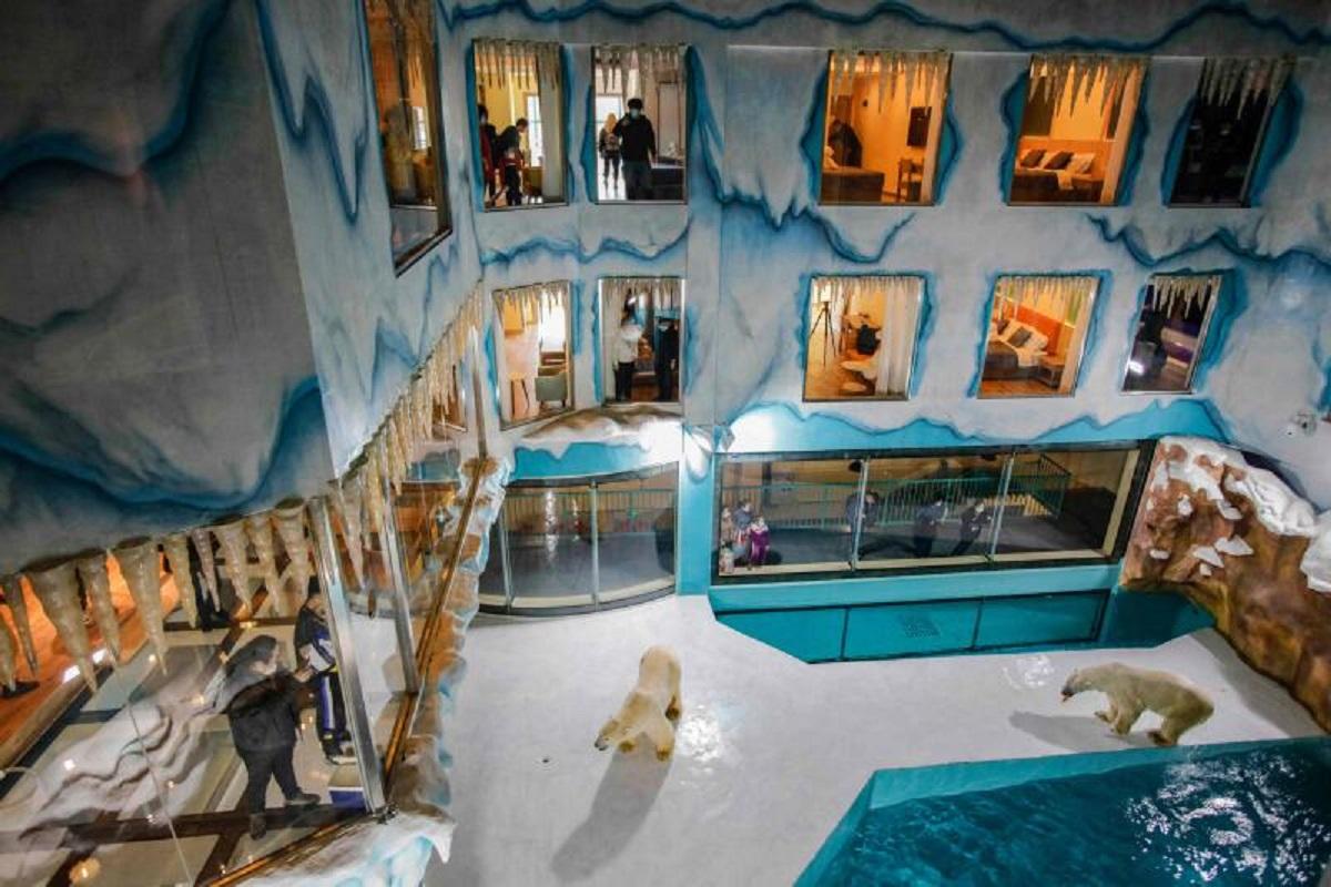 Hotel orsi polari Cina