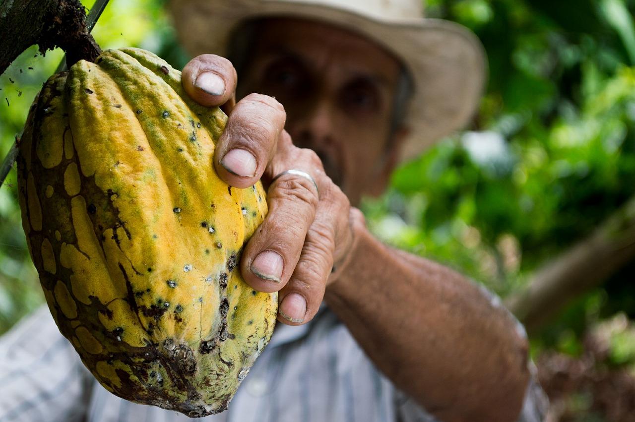 Perù piantagioni cacao