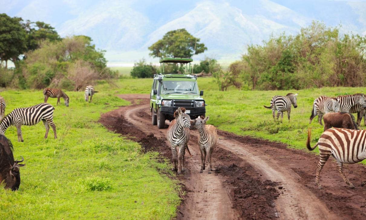 programmare safari in tanzania