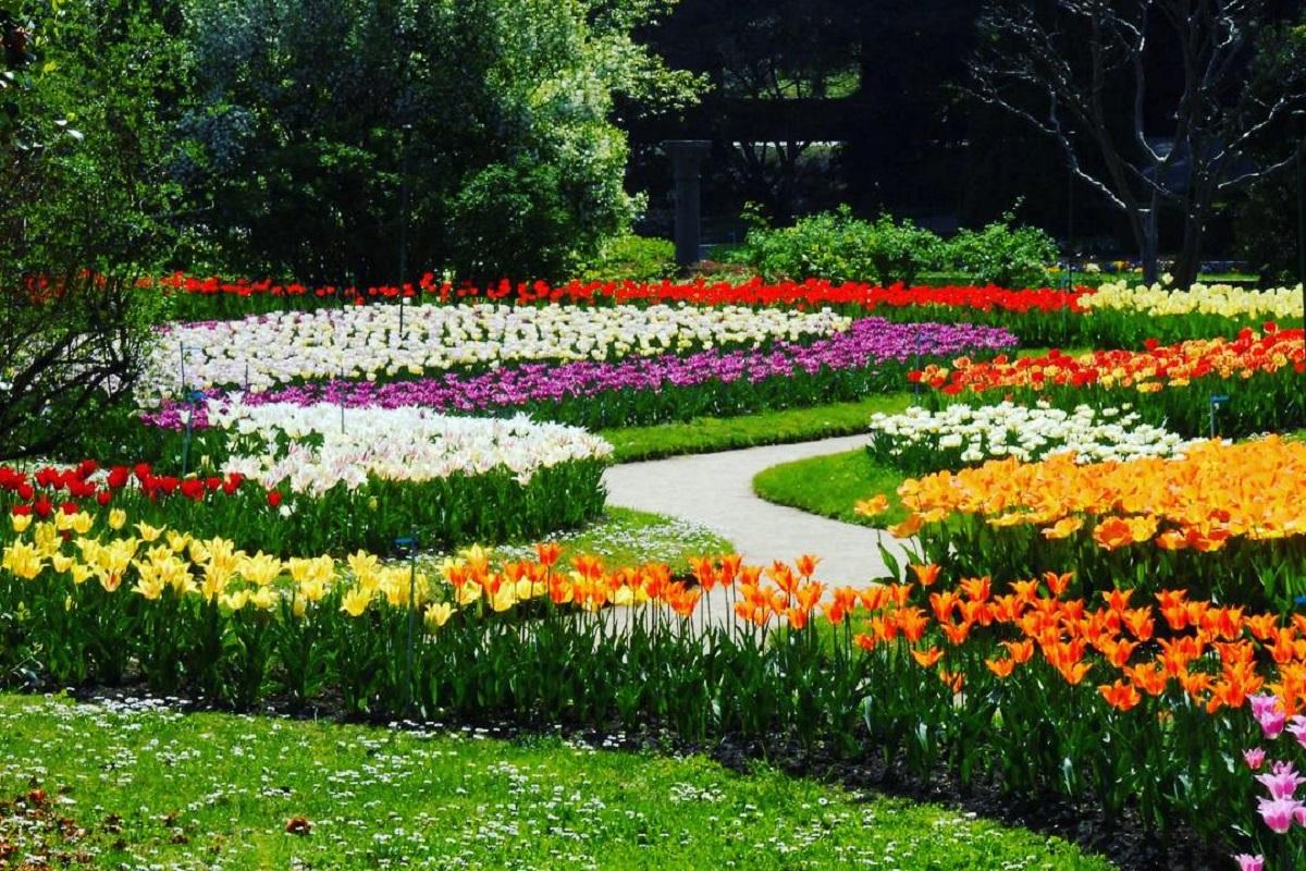Villa Taranto fioritura tulipani
