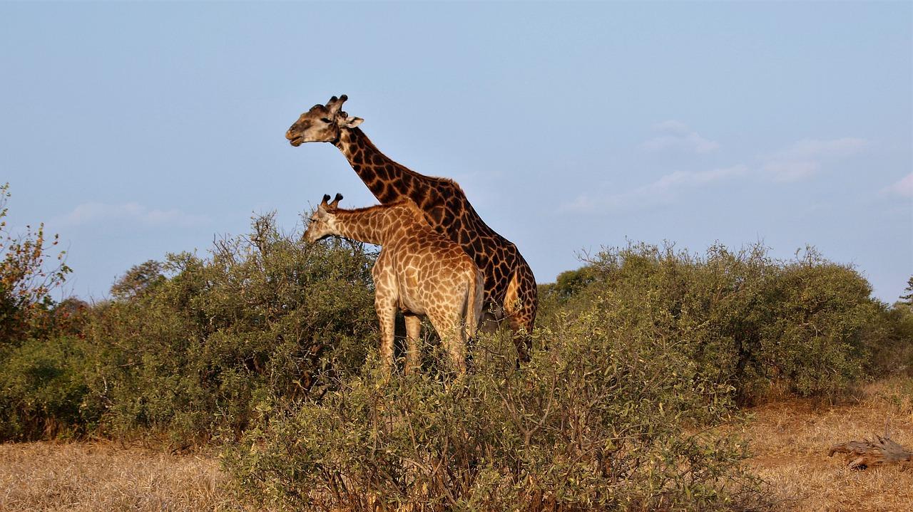 Safari in Africa: le 14 migliori destinazioni