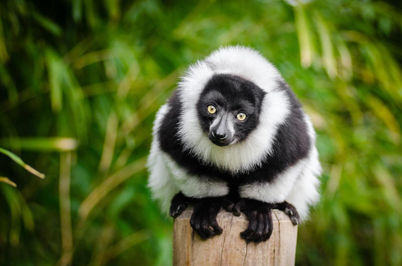 Madagascar: 5 motivi per organizzare un viaggio sull'isola