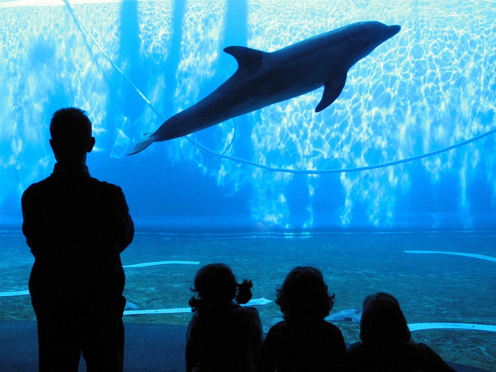 Padiglione dei cetacei