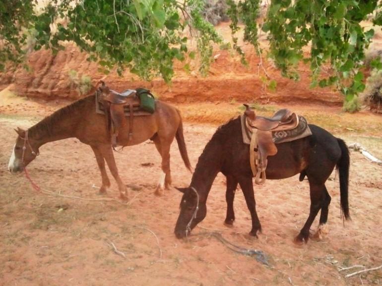 Tempo percorrenza a cavallo monument valley viaggiamo for Quanto costa mantenere un cavallo