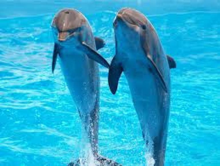 nuotare con foche e delfini a port phillip bay melbourne