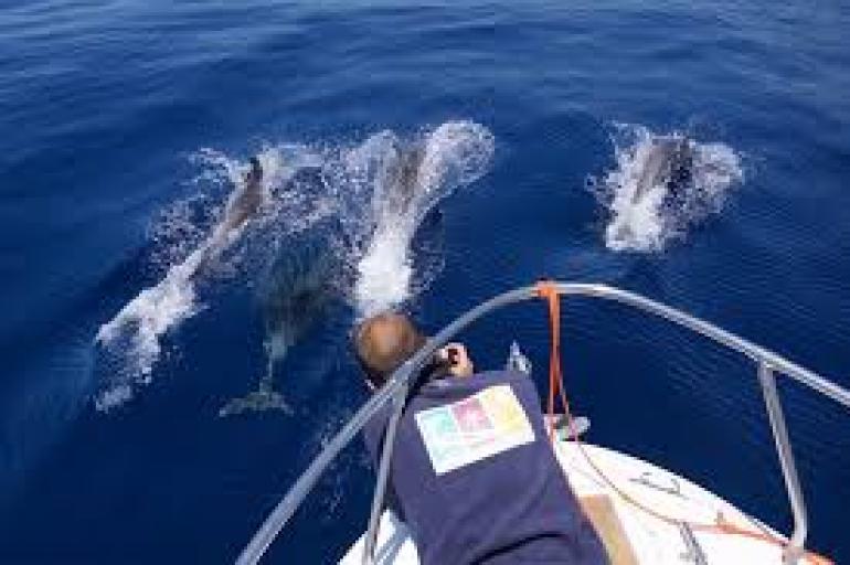 come nuotare con i delfini in inghilterra