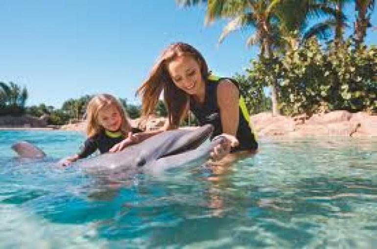 nuotare con i delfini al discovery cove